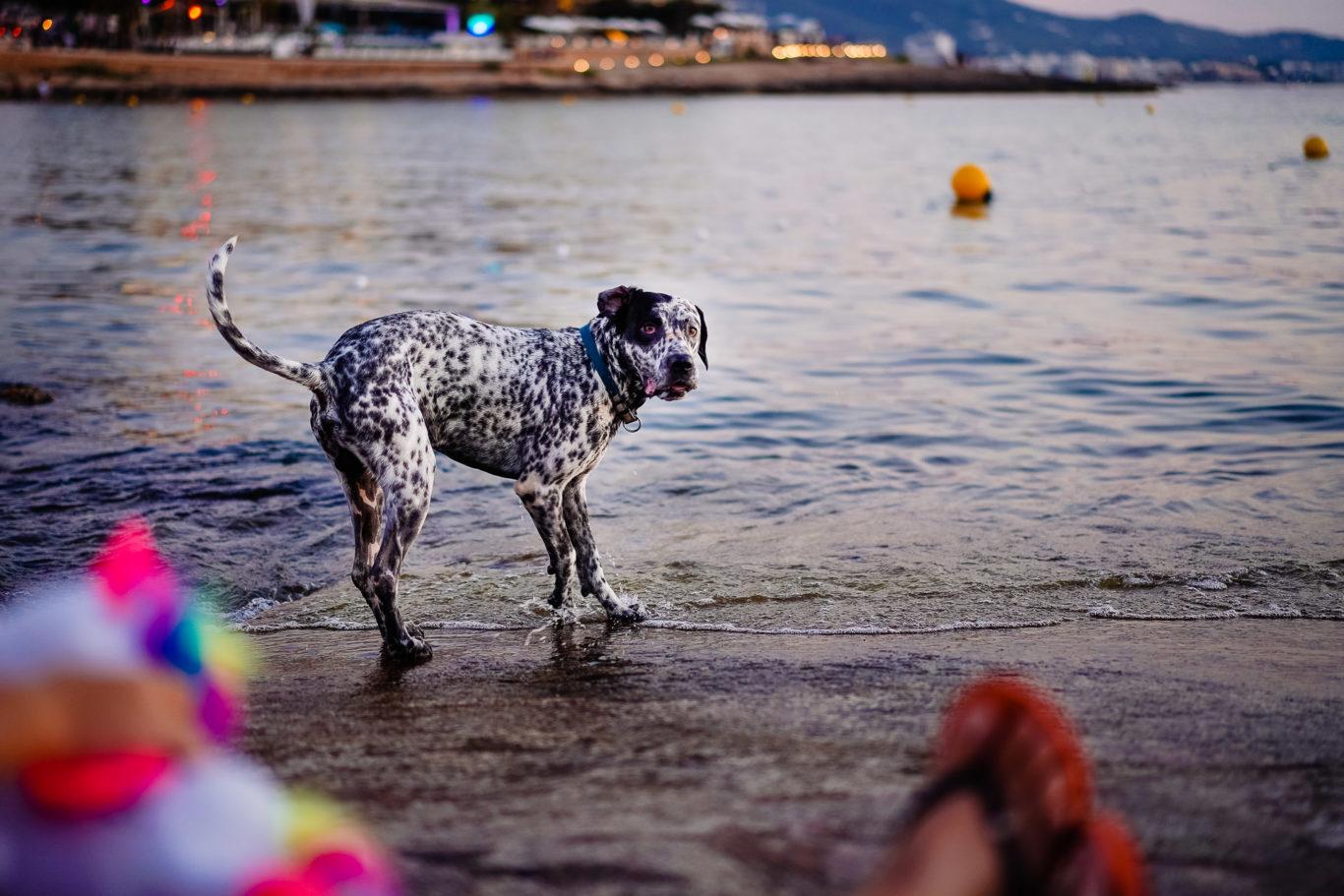 Fotografii de familie la Ibiza - fotograf Ciprian Dumitrescu