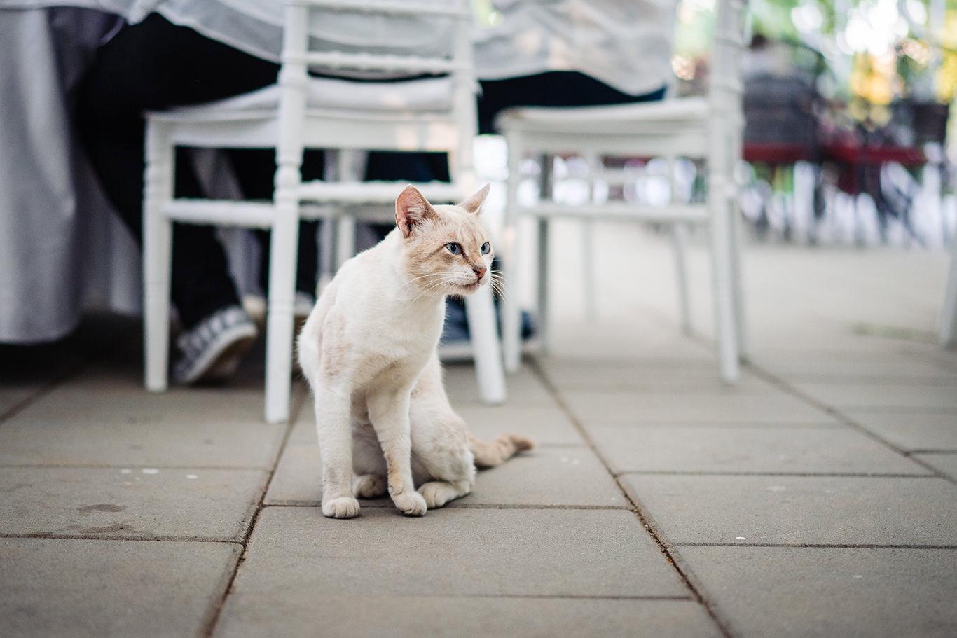 Pisica - un ospete nepoftit