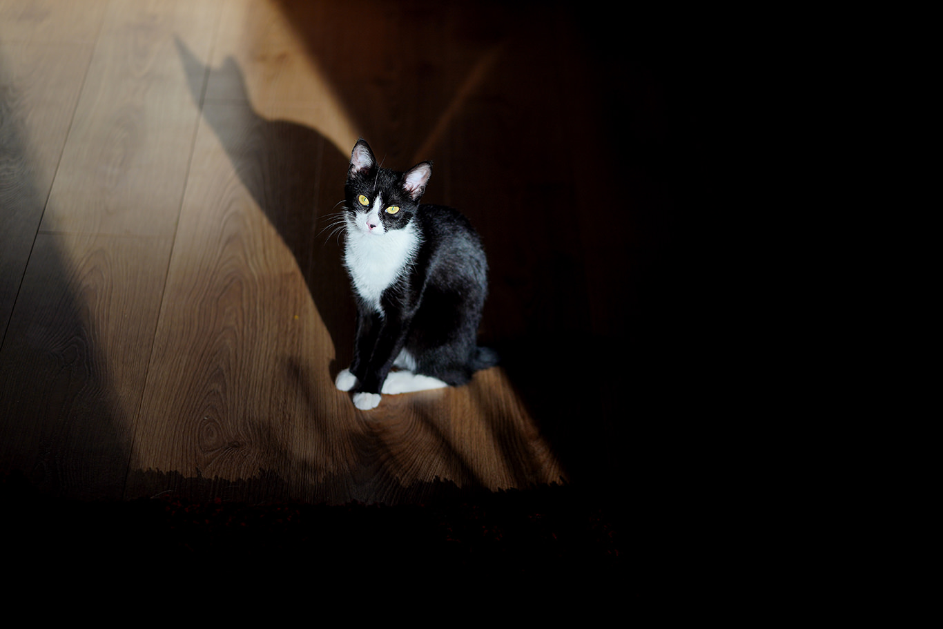 Pisica in soare